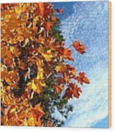 Country Color 30 Wood Print