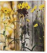 Country Daisy Wood Print