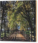 Country Drive Wood Print