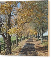 Country Lane Wood Print by Roger Potts