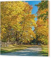 Country Lane Wood Print by Steve Harrington