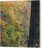 Country Road In Tennessee Wood Print