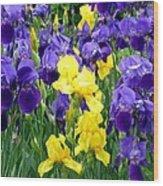 Country Road Irises  Wood Print