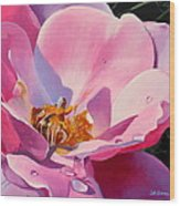 Country Rose Wood Print