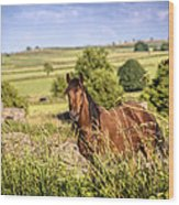 Countryside Horse Wood Print