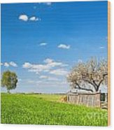 Countryside Landscape During Spring With Solitary Trees And Fence Wood Print