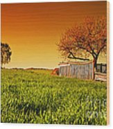 Countryside Orchard Landscape At Sunset. Spring Time Wood Print