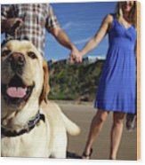 Couple Take Their Dogs For A Walk Wood Print