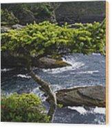 Courageous Tree  Wood Print
