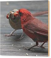 Courting Cardinal Wood Print