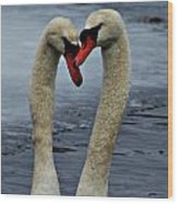 Courting Swans Wood Print