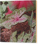 Courtyard Caladium Wood Print