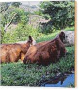 Cow 6 Wood Print