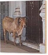 Cow At Church At Colva Wood Print