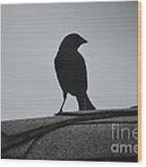 Cow Bird Silhouette  Wood Print