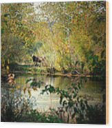 Cow By The Pond Wood Print