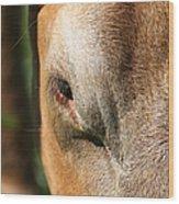 Cow Closeup 7d22397 Wood Print
