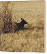 Cow Elk Wood Print