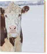 Cow - Fine Art Photography Print Wood Print