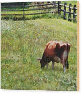 Cow Grazing In Pasture Wood Print