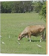Cow Grazing With Egret Wood Print