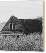 Cow House Black And White Wood Print