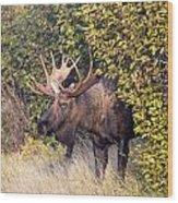 Cow Hunter Wood Print