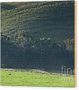 Cow In Field Wood Print