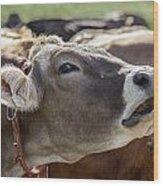 Cow In Heiterwang Wood Print