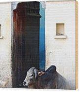 Cow In Temple Udaipur Rajasthan India Wood Print