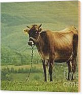 Cow In The Field Wood Print by Jelena Jovanovic