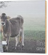 Cow In The Fog Wood Print