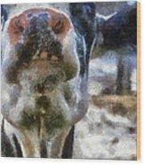 Cow Kiss Me Photo Art Wood Print