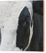Cow Left Profile Wood Print