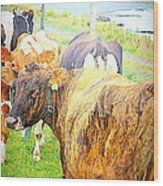 Cows Are Also Having Their Meetings  Wood Print