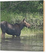Cow Moose Breakfast Wood Print