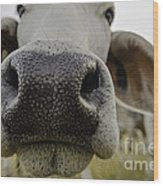 Cow Nose Wood Print by Cindy Bryant