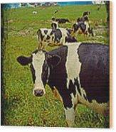 Cow On Farm Version - 2 Wood Print