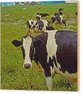 Cow On Farm Version - 5 Wood Print