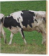 Cow Path Wood Print