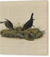 Cow-pen Bird Wood Print