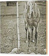 Cow Pony Wood Print
