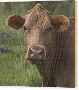 Cow Portrait I Wood Print