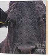 Cow Pretending To Be A Bull Wood Print