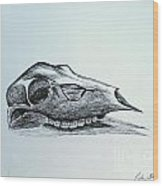 Cow Skull 2 Wood Print