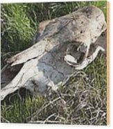 Cow Skull, New South Wales, Australia Wood Print