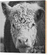 Cow Square Wood Print