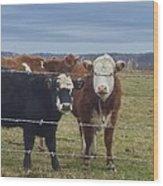 Cow Time Wood Print