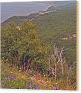 Cow Vetch In Cape Breton Highlands Np-ns Wood Print