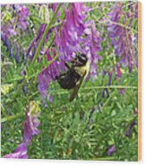 Cow Vetch Wildflowers And Bumble Bee Wood Print